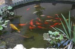 Inherited a pond